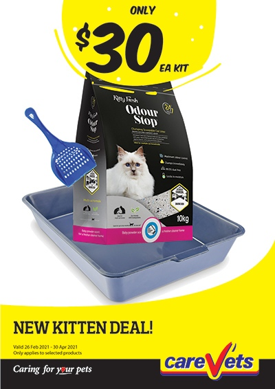 new-kitten-deal