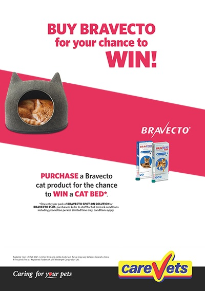 bravecto-cat-bed