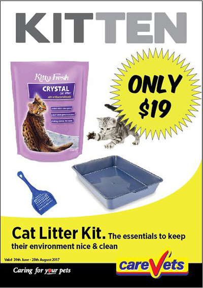 cat-litter-kit-only-19