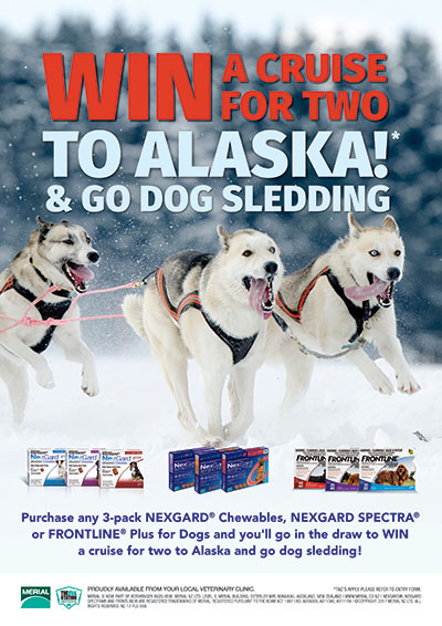 nexgard-alaska-dog-sledding
