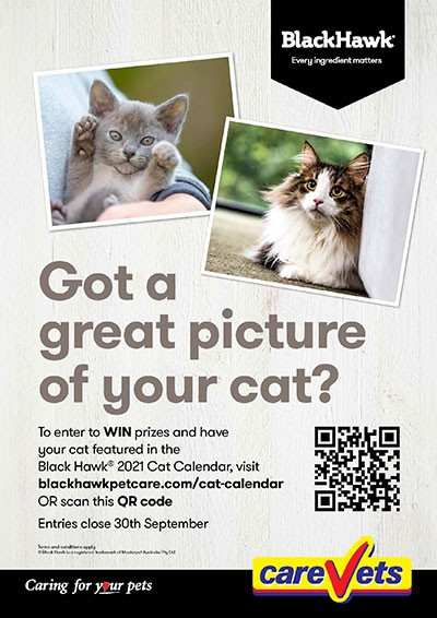 Black-Hawk-2021-Cat-Calendar-Comp