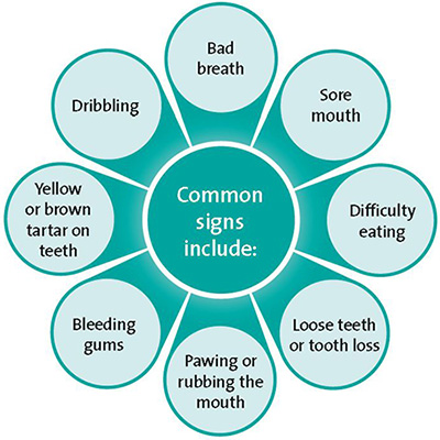 Common signs of oral health problems