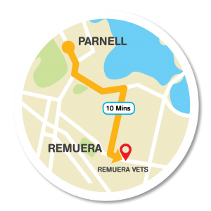Map from CareVets Parnell to Remuera Vets