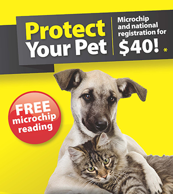 Microchip and National Registration for $40 during December 2019
