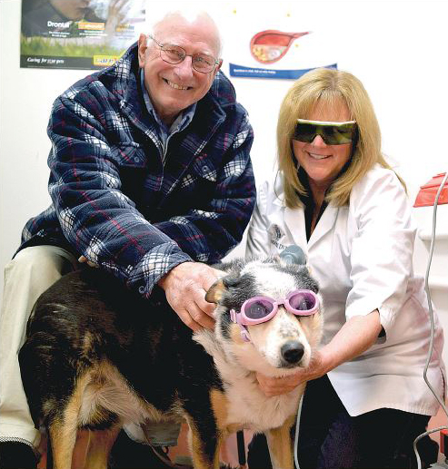 Jim Collins and his dog Jess receiving Cold Laser Treatment