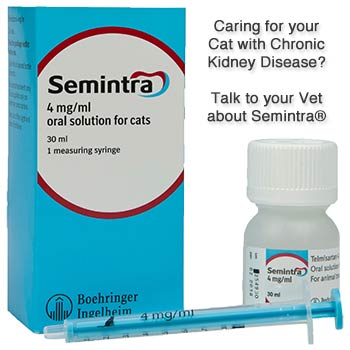 Semintra - Caring for your Cat with Chronic Kidney Disease